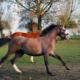 Horse Pilot Tourelles